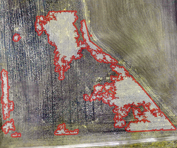 Poverty Weed coverage was quantified using Agribotix UAV collected color and infrared images and image processing software. The trapezoidal field above has 16% of its surface covered by poverty weed.