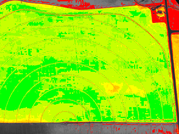 A false-colored vegetation index (NDVI) image of a barley farm indicates the extent of crop development and can be used to create top-dress prescription maps, saving on fertilizer and boosting yields.
