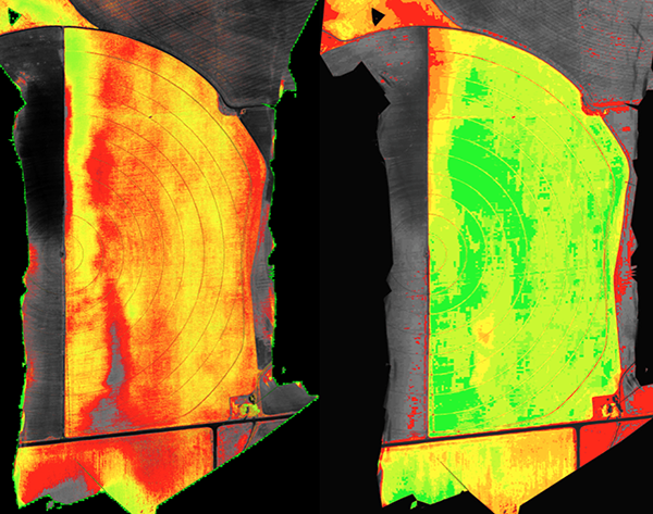 The NDVI image (left) and DVI image (right) are shown of a canopied barley field. Notice the NDVI image shows the healthiest area of the field to be in the upper half of the pivot close to the road and the DVI image shows just the opposite. Elsewhere in the fields these images give similarly conflicting results.