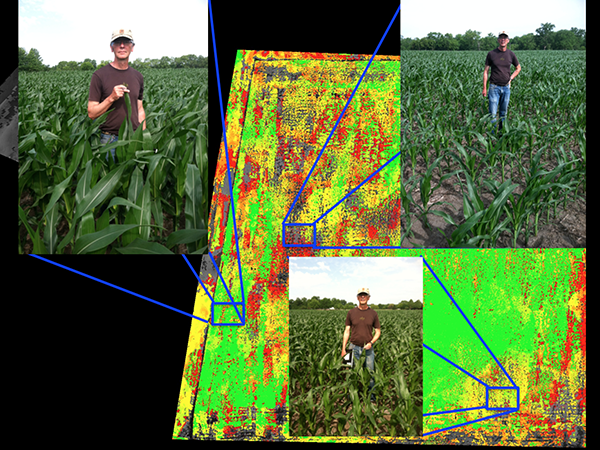 """Magnifying the western portion of the field, it is clear that there are three general regions as identified by the DVI map. In the green band across the middle, the corn is nearly chest high (Tom is 6'4""""), in the red and black band in the northwest, the corn is more like ankle high, and in the yellow band to the east the corn is about waist high."""