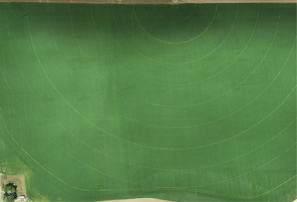 Drone-collected mosaic of a barley field with 3cm ground resolution. This full resolution file is more than 500 Mb.