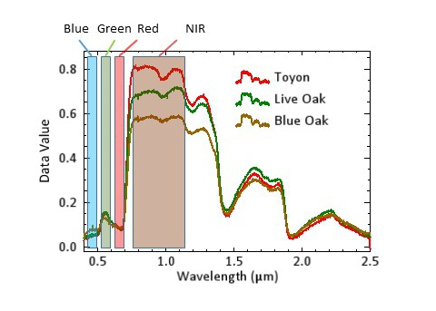 Several vegetation signatures with the blue, green, red and near infrared portions of the spectrum highlighted.