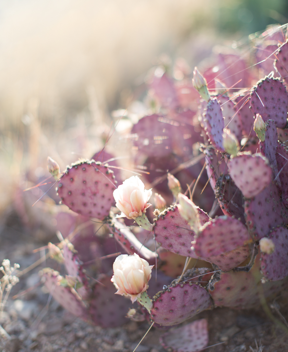 olivia_ashton_photography_roadtrip_cactus_texas
