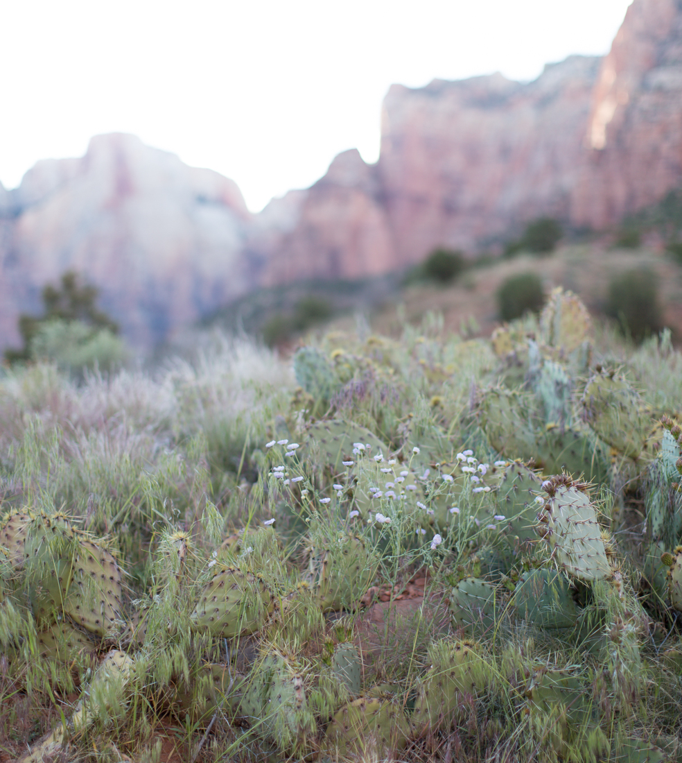 olivia_ashton_photography_roadtrip_zion_nationalpark_utah