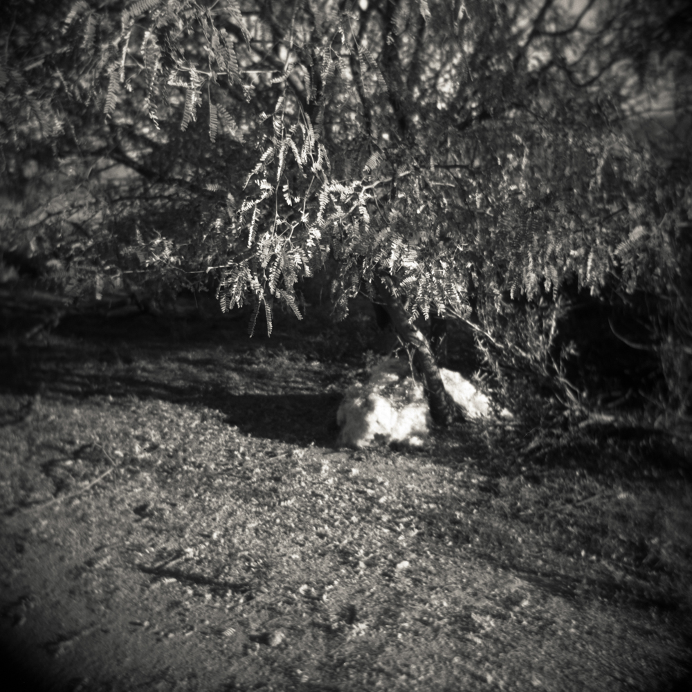 03/17 – Under the Mesquite Tree   Gelatin Silver Print on Ilford Warmtone Fiber Paper © 2014, Gina DeGideo