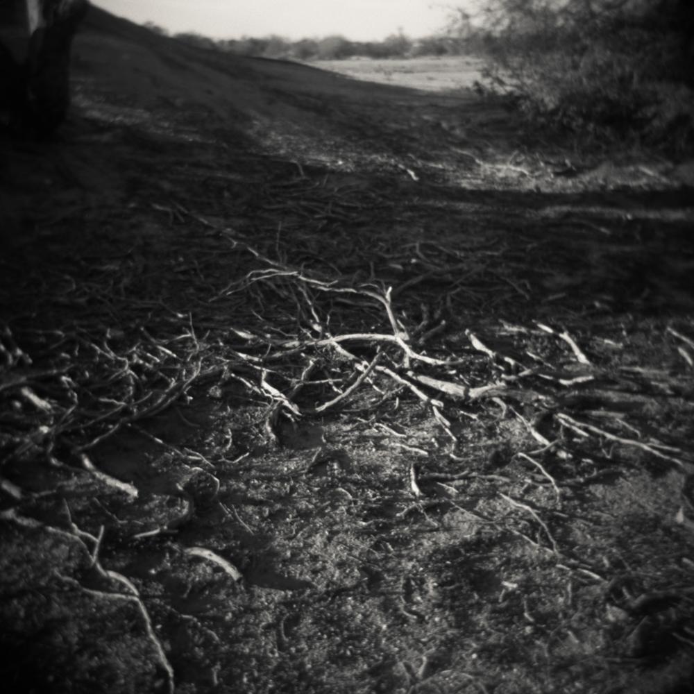 06/09 – Antlers   Gelatin Silver Print on Ilford Warmtone Fiber Paper © 2014,Gina DeGideo