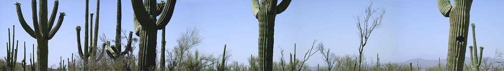 "Saguaro National Park No. 1, 2002 17"" x 96"""