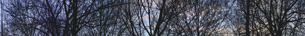 "Dearborn Park, 2003 15"" x 96"""