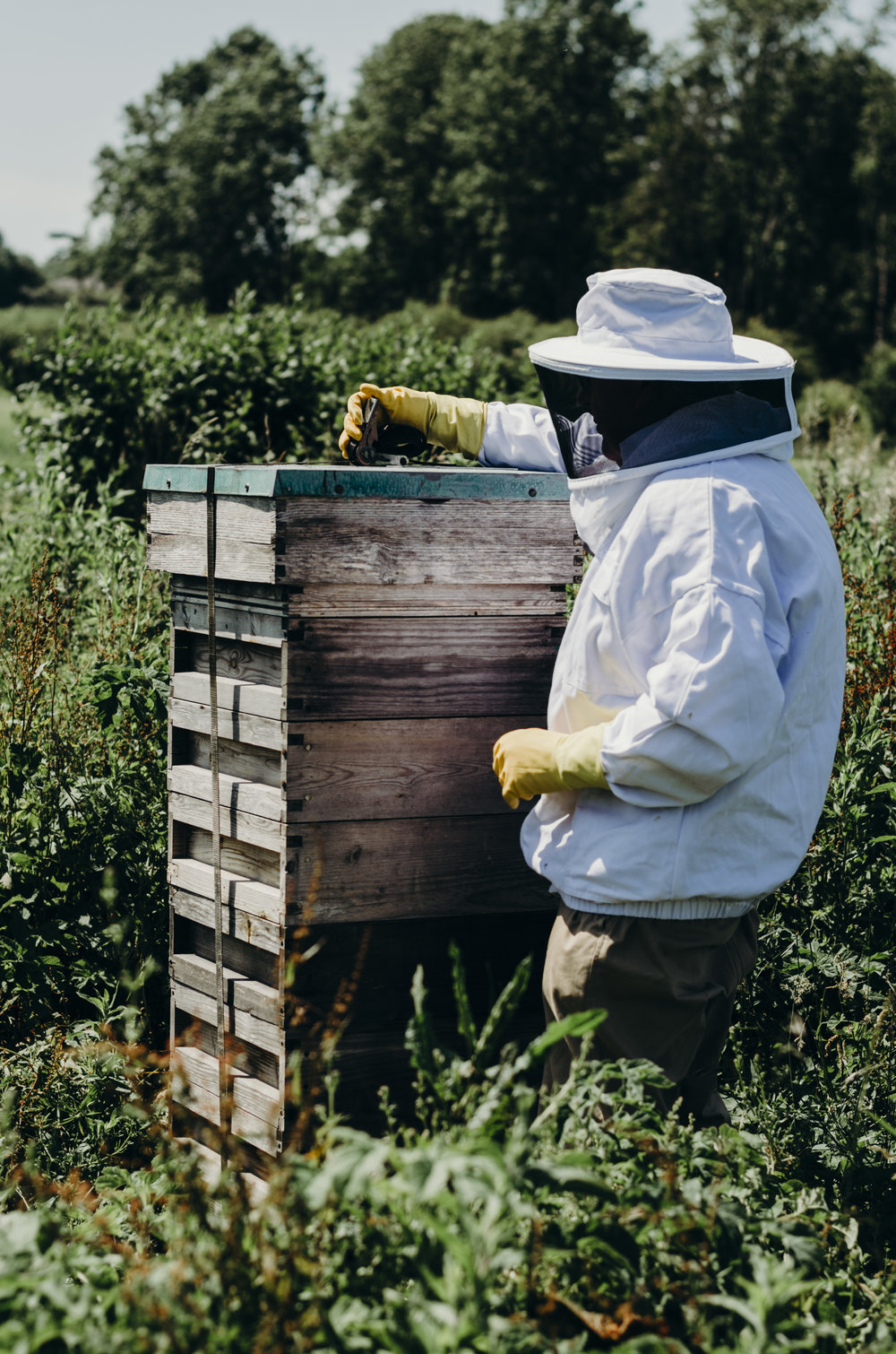 Beekeeping_1.JPG