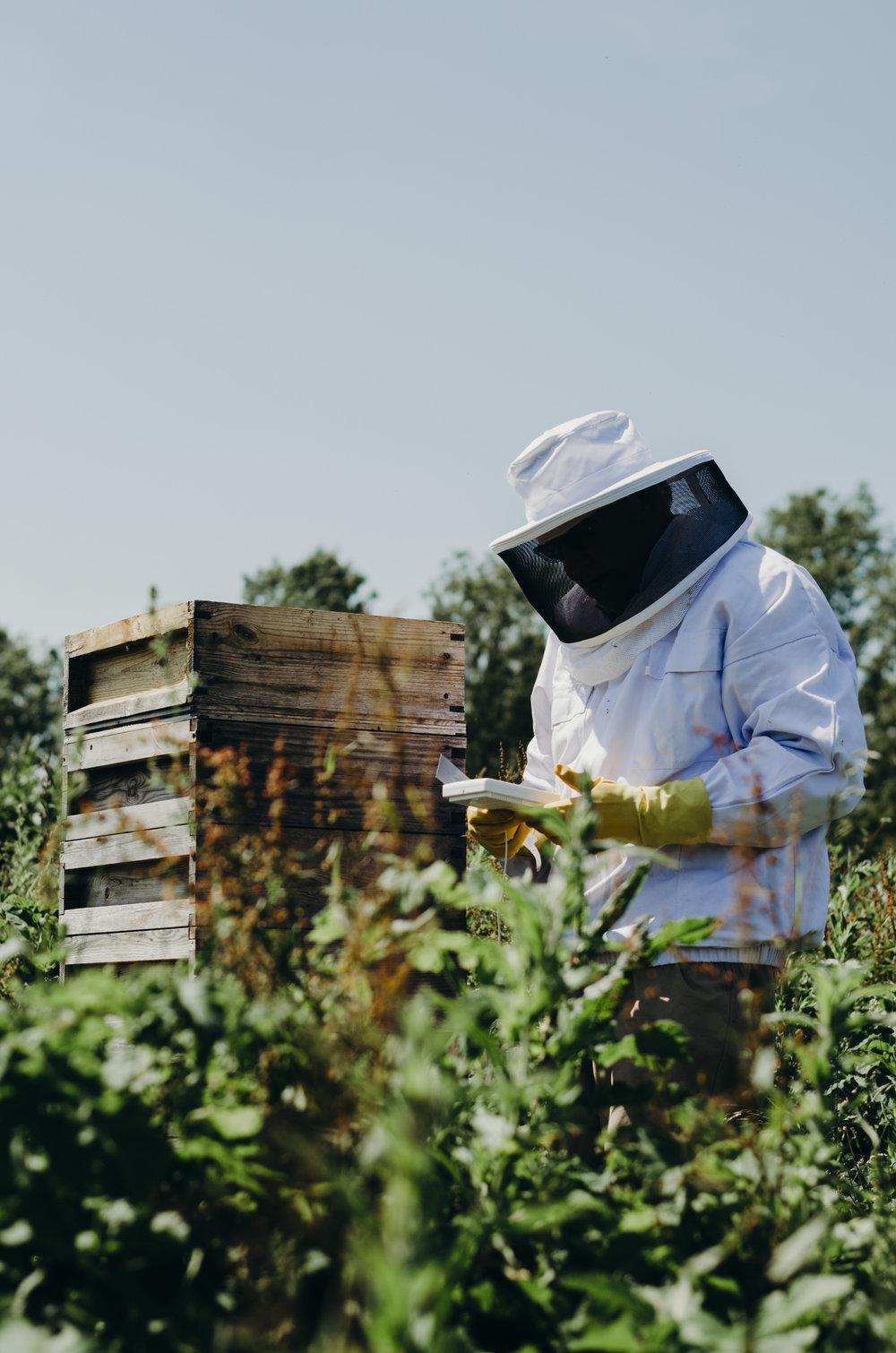Beekeeping_8.JPG