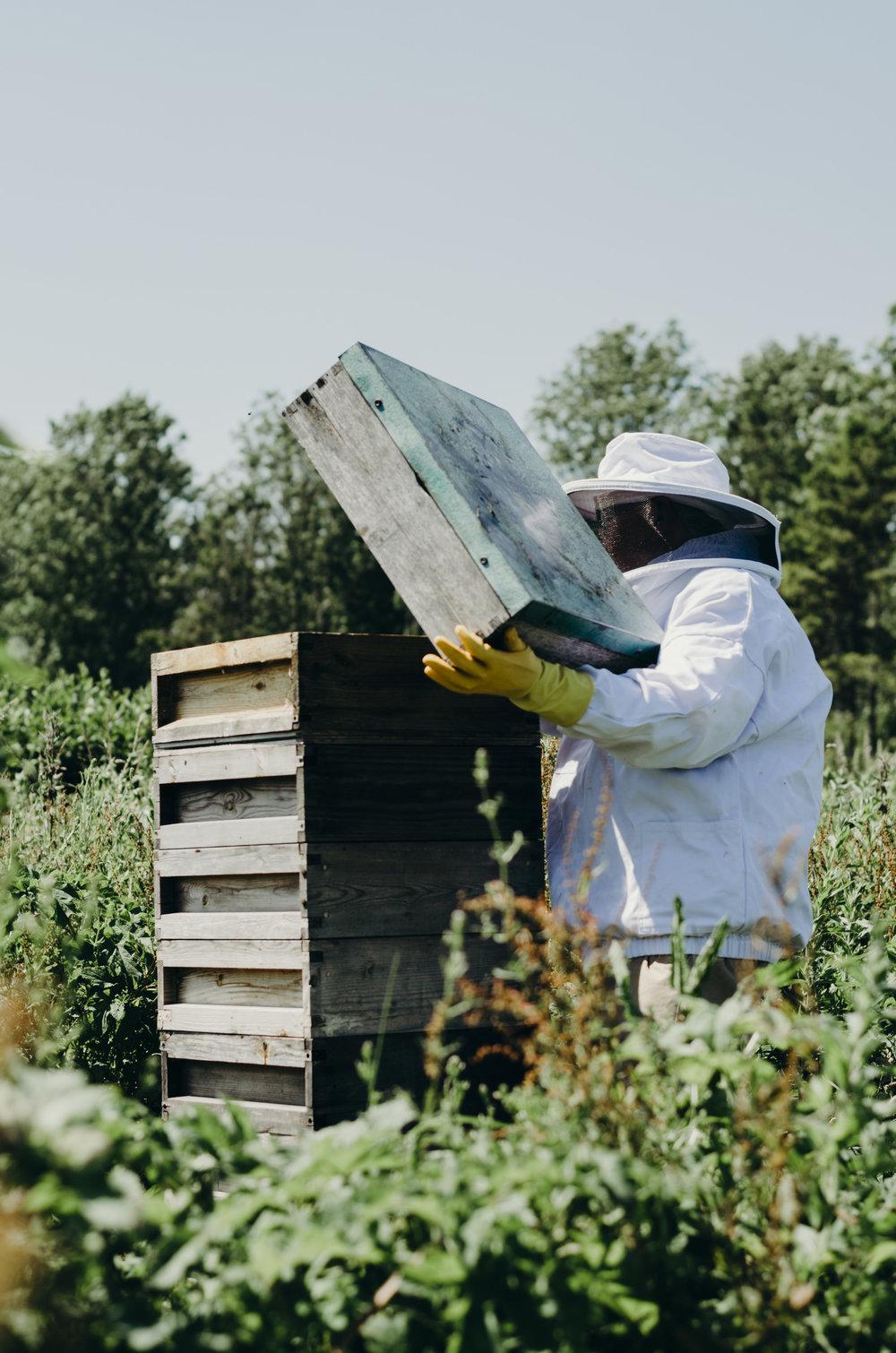 Beekeeping_5.JPG