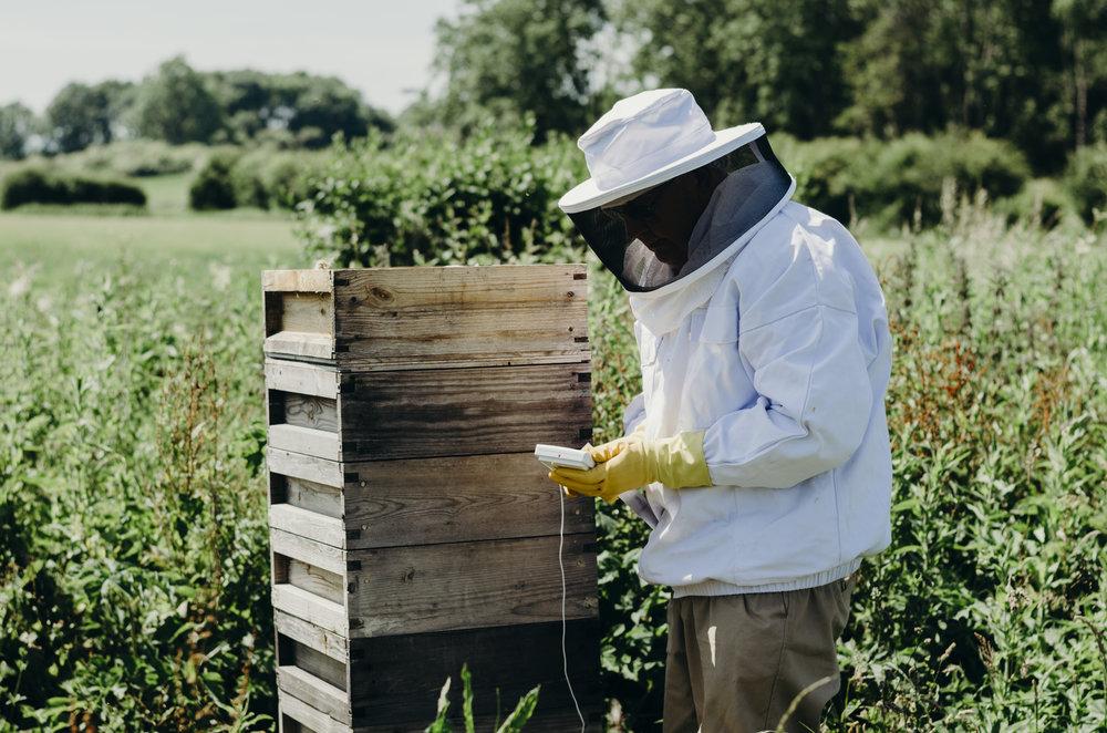 Beekeeping_7.JPG