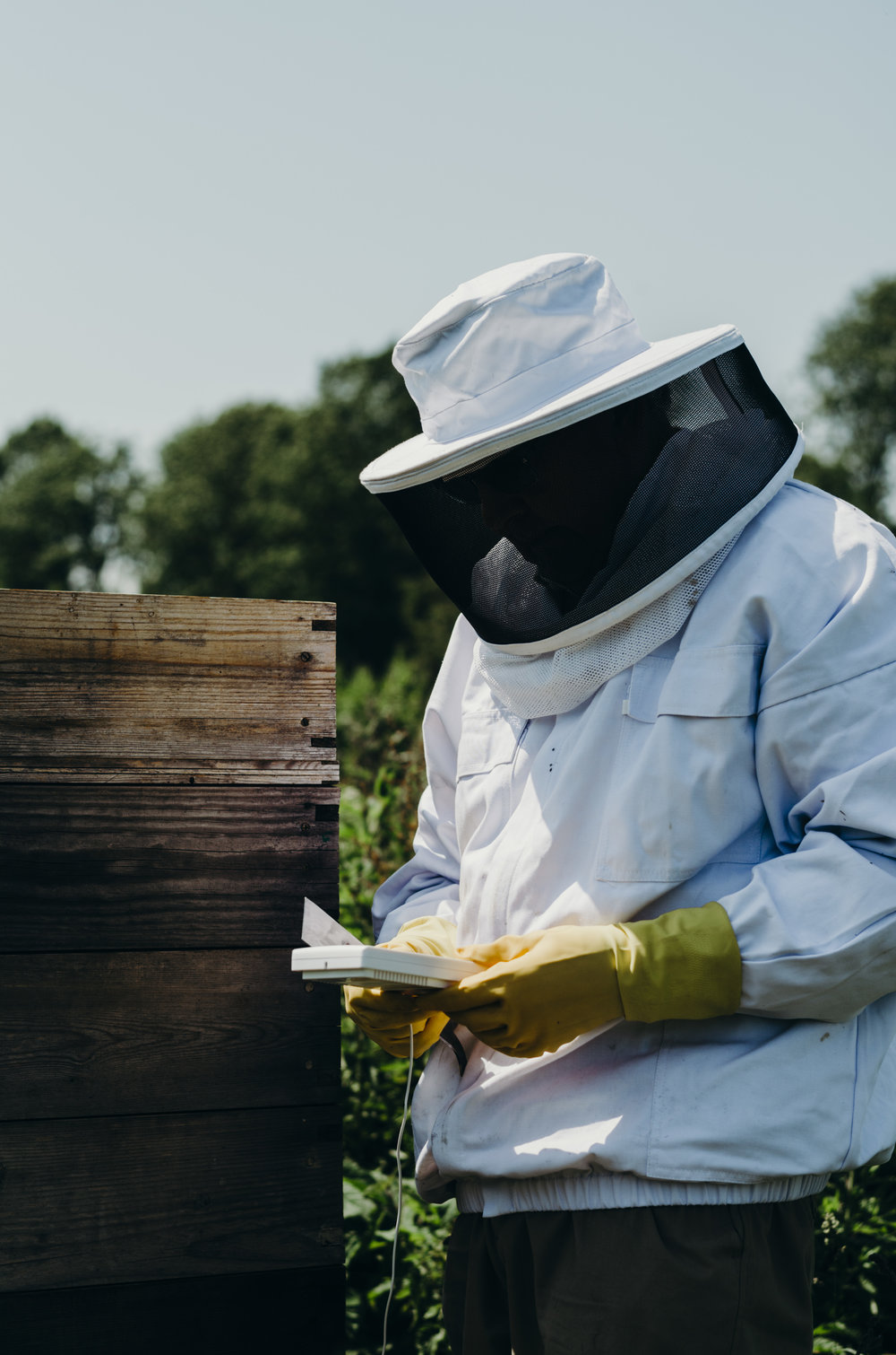 Beekeeping_12.JPG