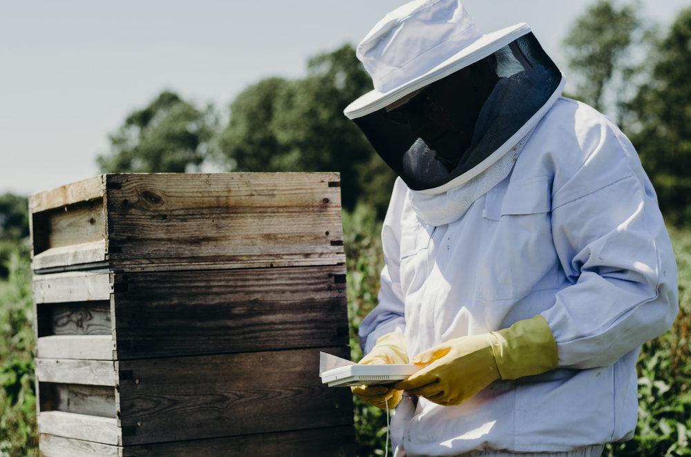Beekeeping_14.JPG