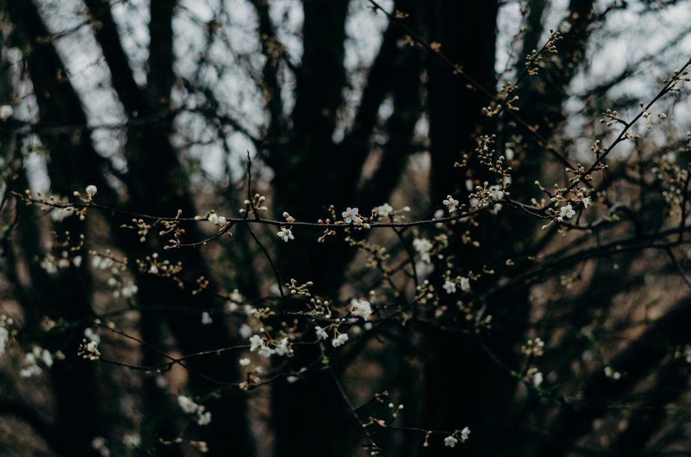 Anni Townend - Aiste Saulyte Photography-88.jpg