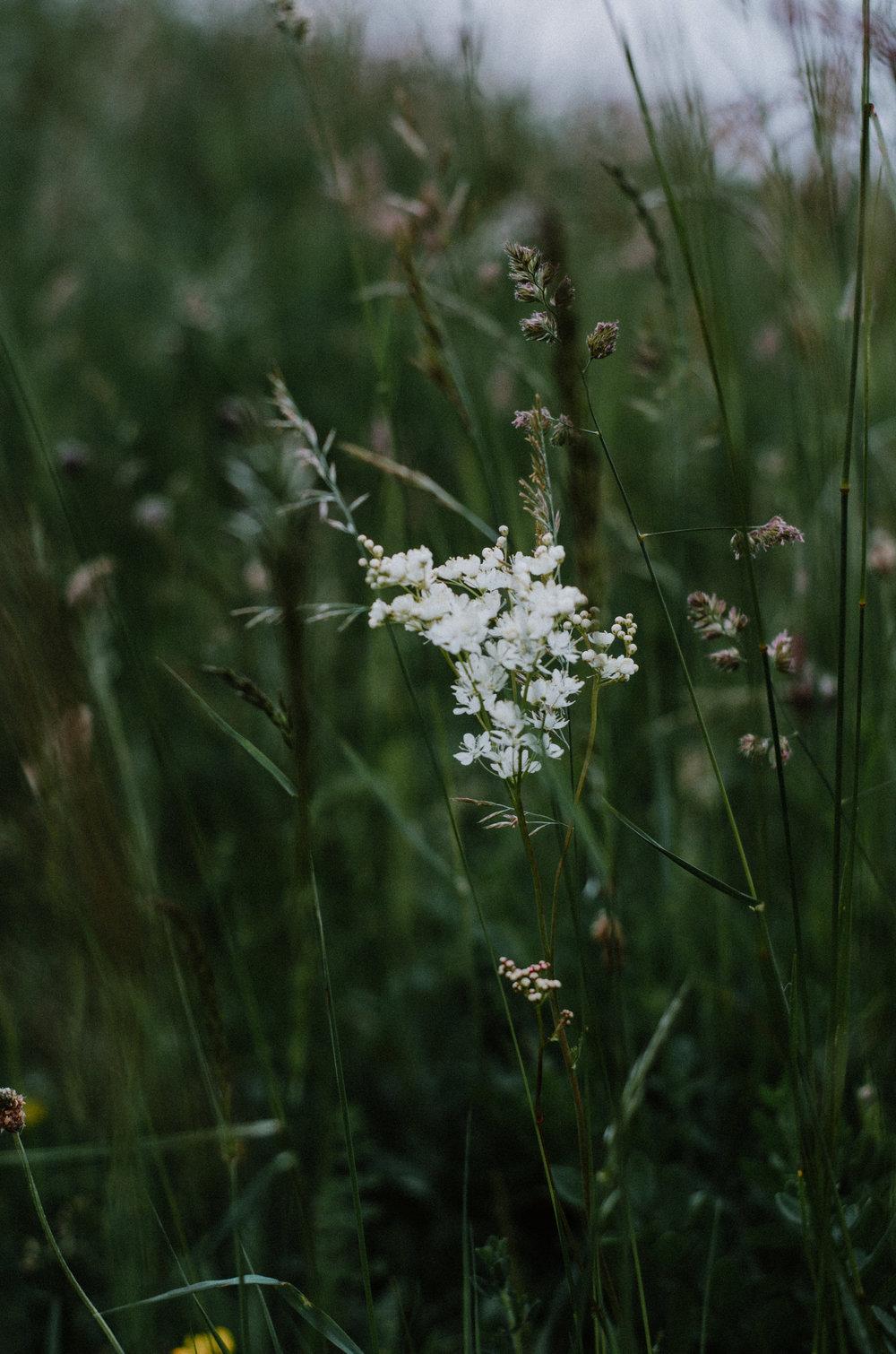 June 2018 - Aiste Saulyte Photography-15.jpg