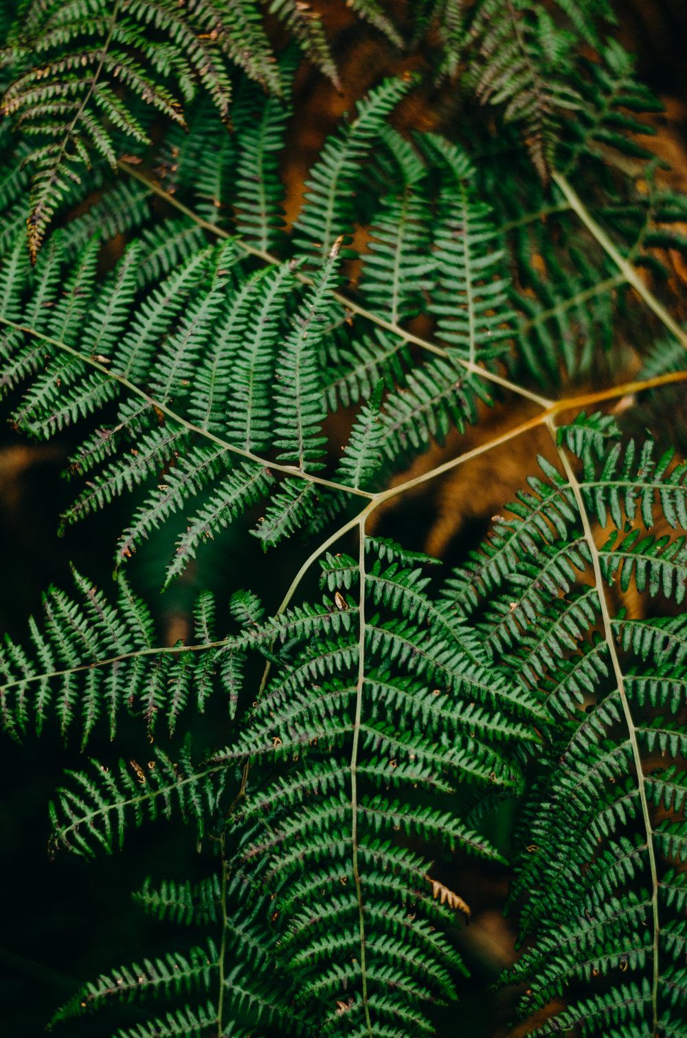 Aiste's 25th Birthday - Ashdown Forest - Aiste Saulyte Photography-234.jpg