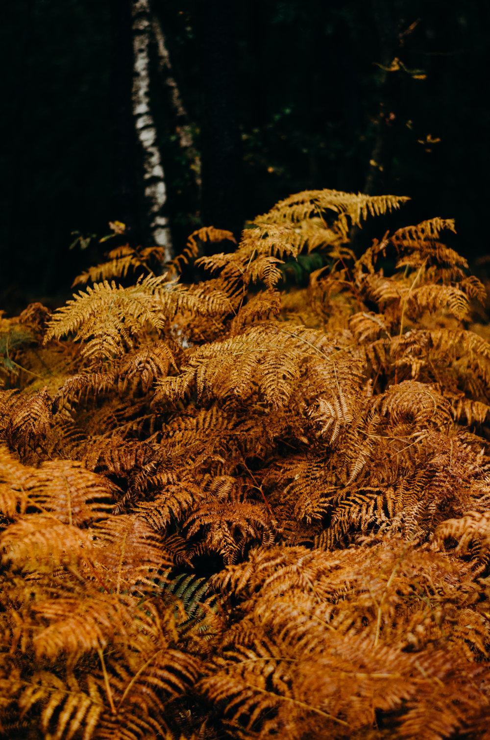 Aiste's 25th Birthday - Ashdown Forest - Aiste Saulyte Photography-226.jpg
