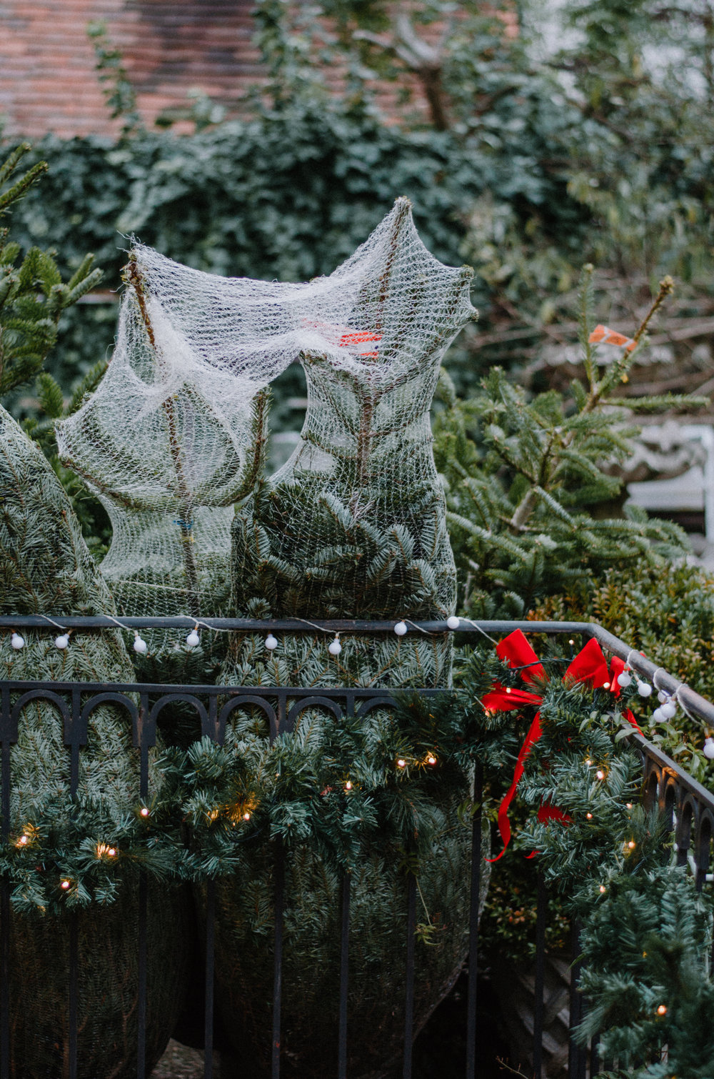 December Nature 2018 - Aiste Saulyte Photography-41.jpg