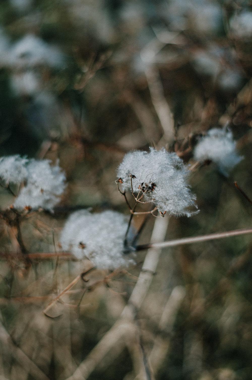 Alfriston - Aiste Saulyte Photography-2.jpg