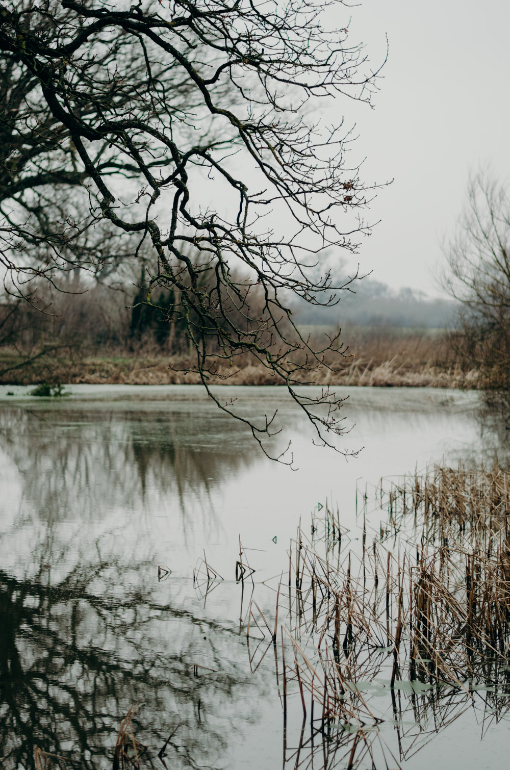 Nature- Aiste Saulyte Photography - 2018-01-05.jpg