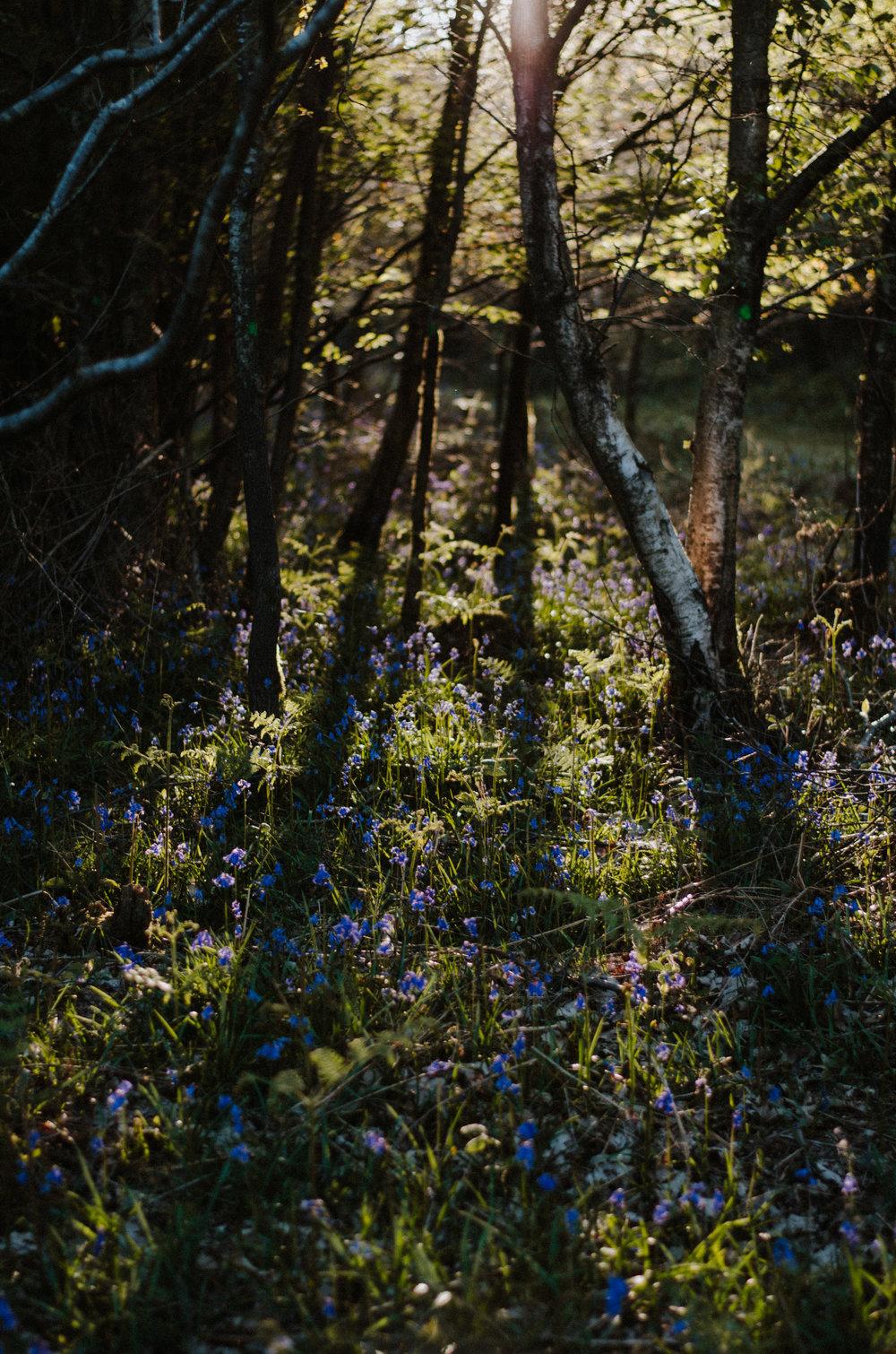 Fire & Wild - Deer Feast - Aiste Saulyte Photography-40.jpg