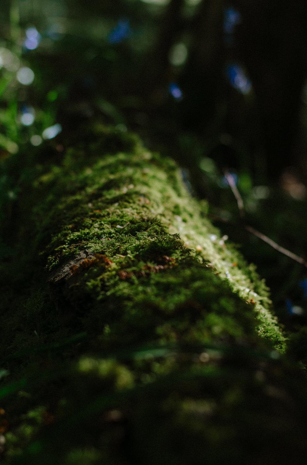 Woodland Magic - Aiste Saulyte Photography-45.jpg