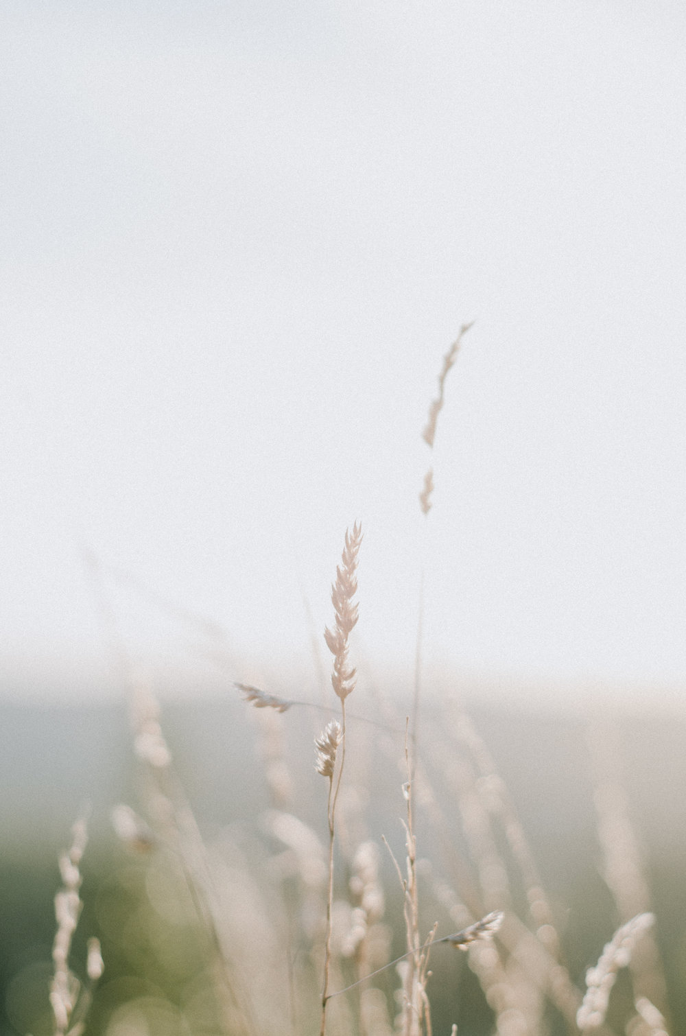 Autumn. Botanical Magic 2018 - Aiste Saulyte Photography-5.jpg