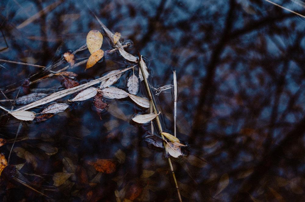 December Nature 2018 - Aiste Saulyte Photography-27.jpg