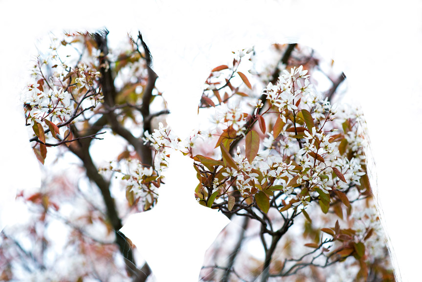 Double exposure with Spring blossom.