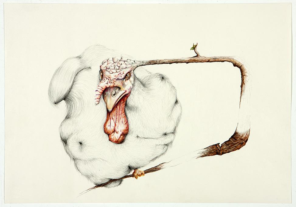 untitled, 2012, 35x50 cm, colour pencil on paper