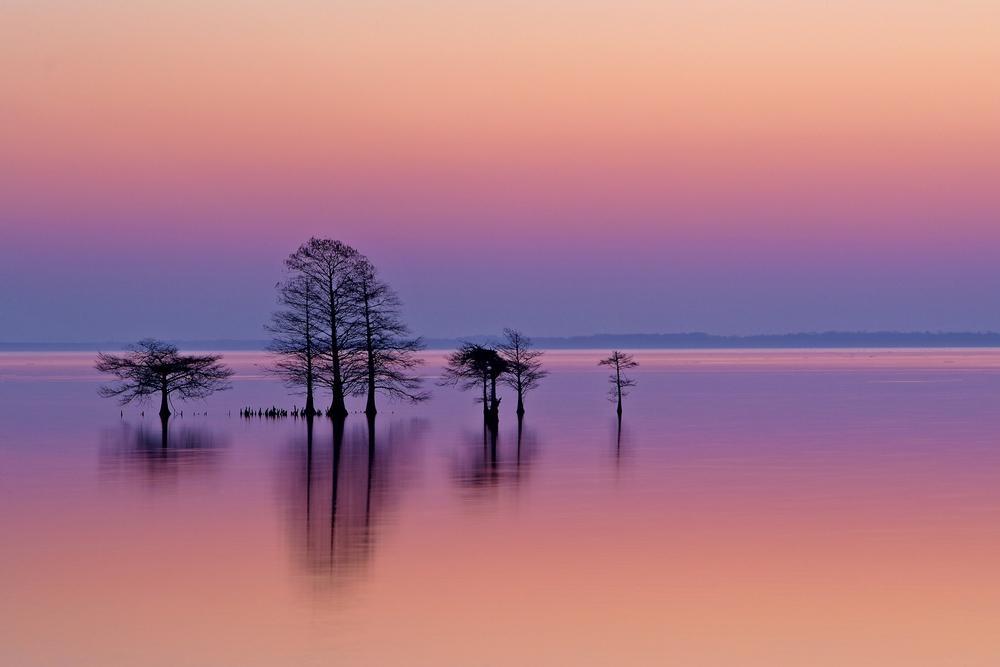 LakeMattamuskeet.jpg