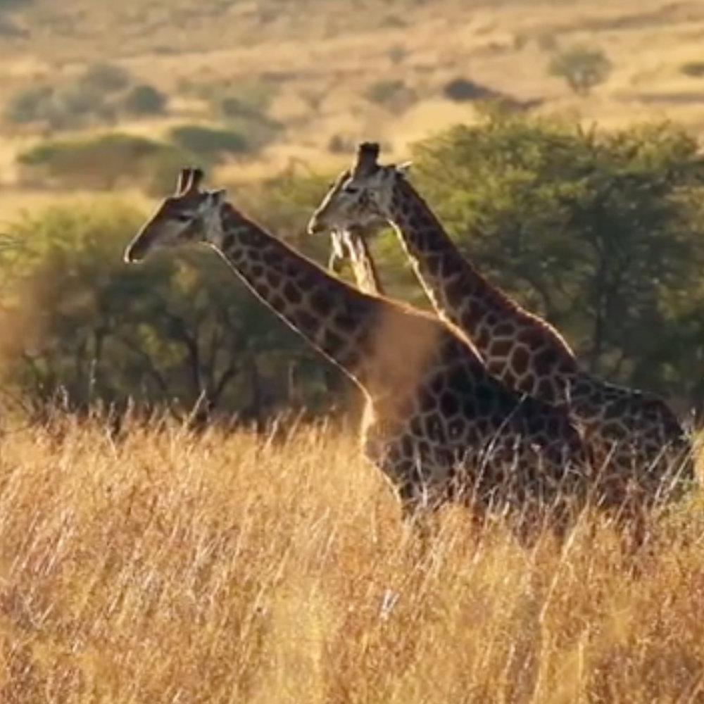 P&G ALWAYS AFRICA IMAGE.jpeg