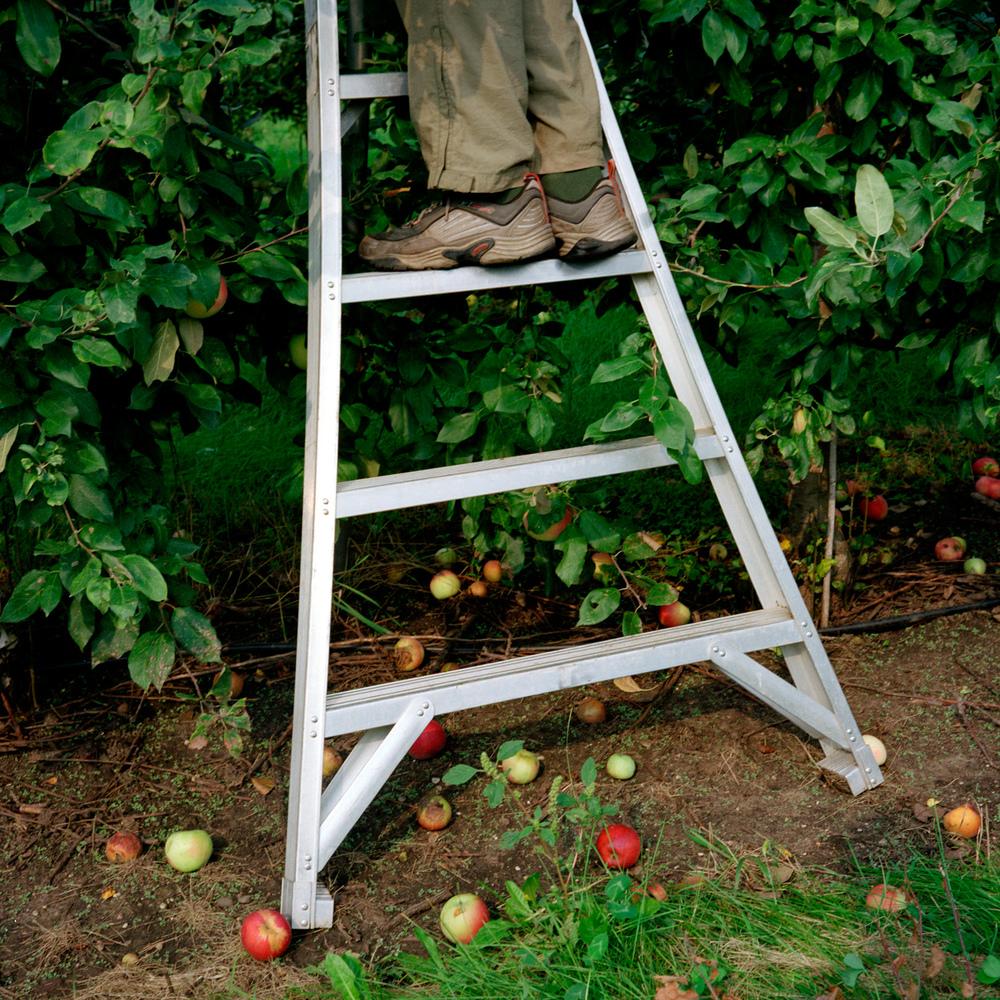 020_ladder.jpg