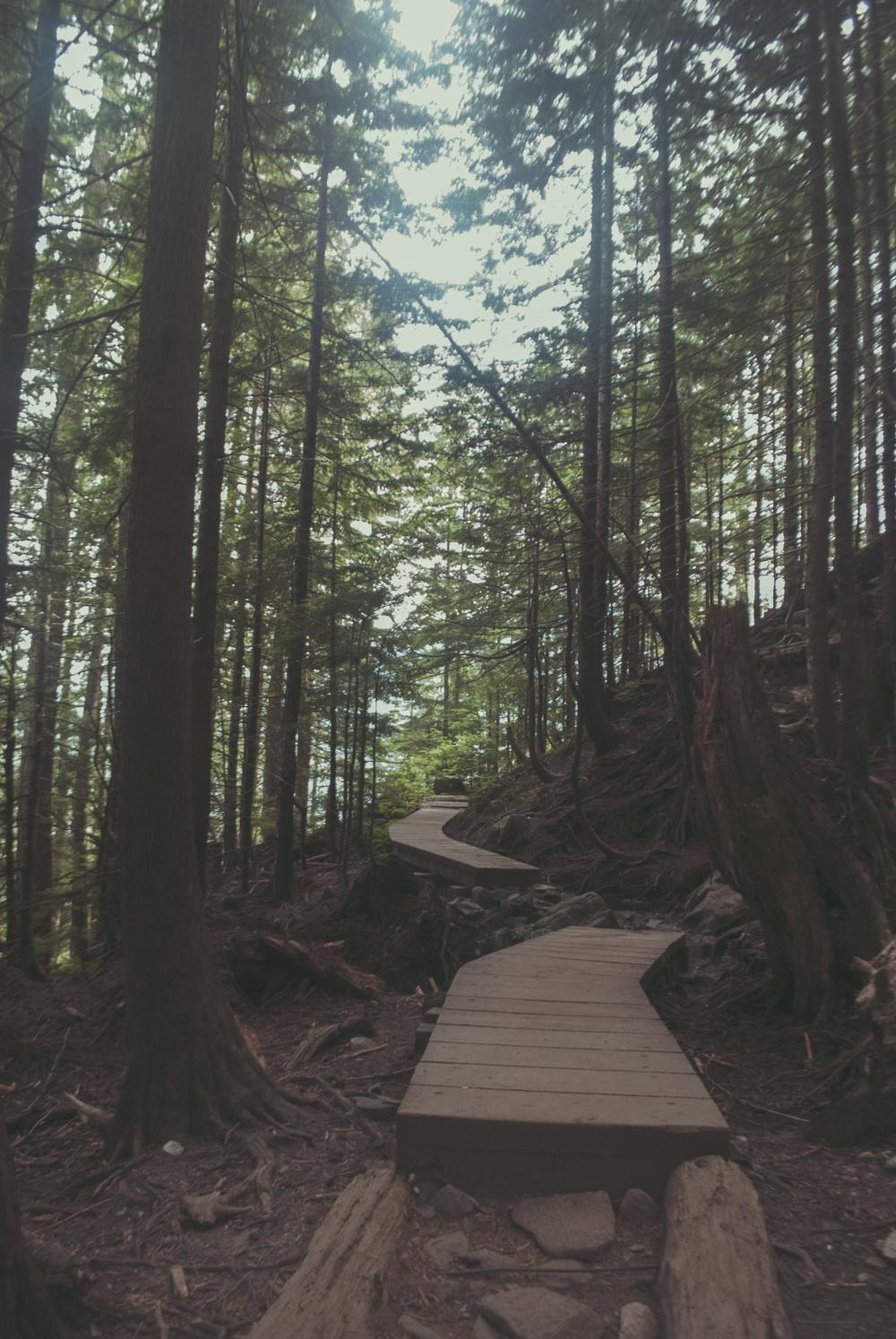 Seattle_pathway_verticalTrees_stairs_DSC0066.jpg