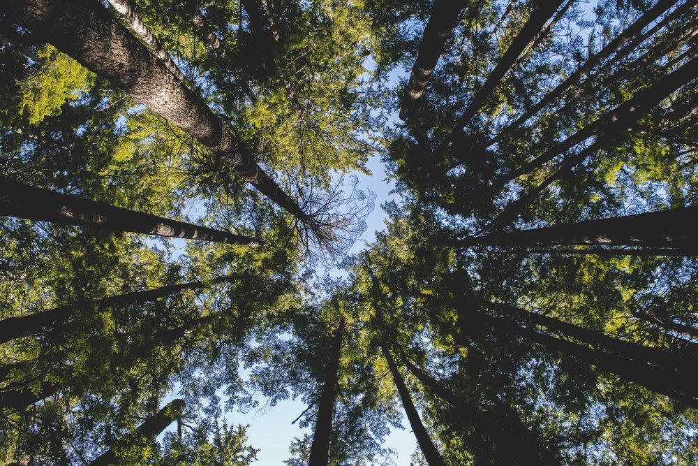 Vancouer_ADoucette_LookingUp.jpg