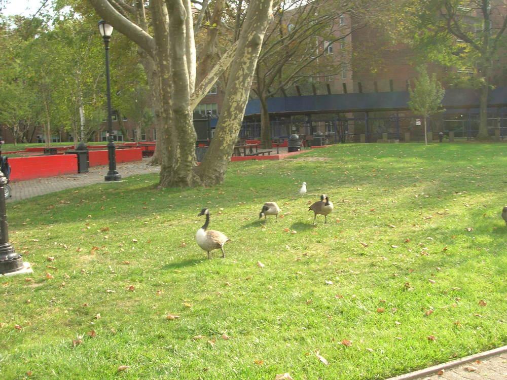 5_Ducks.JPG