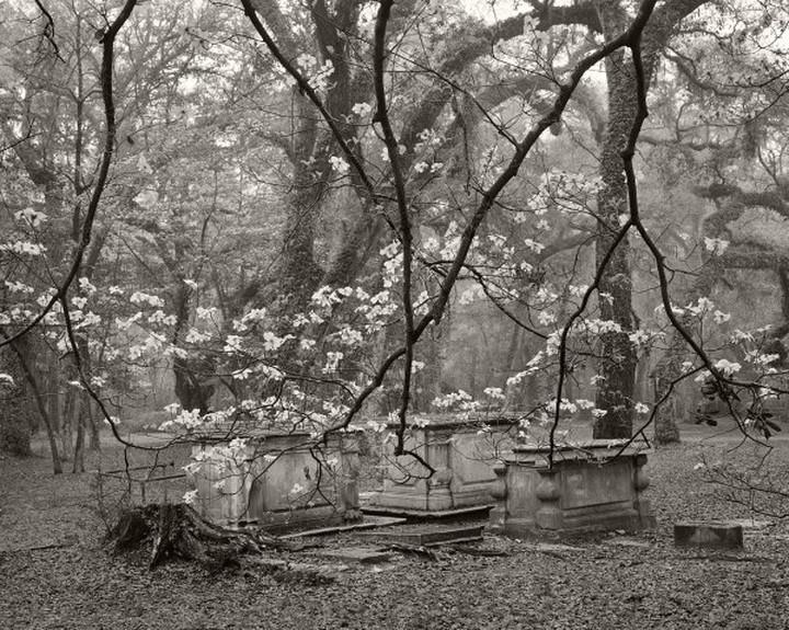 Dogwoods and Graves, Sheldon Church #205