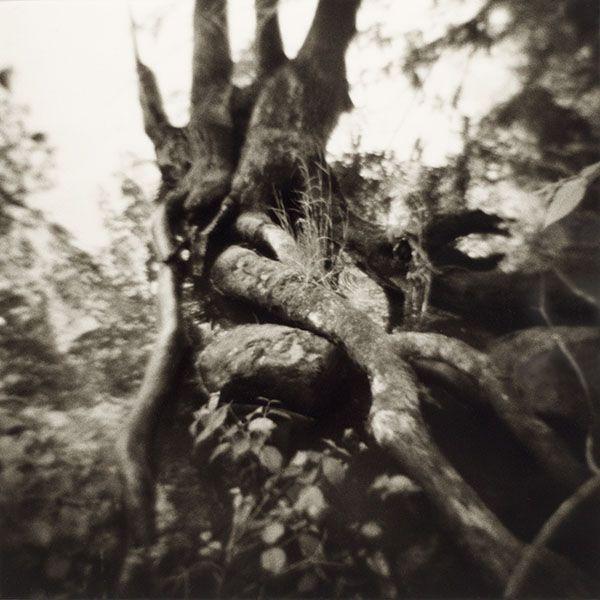 Tree near Seneca River, Phoenix NY, 1980
