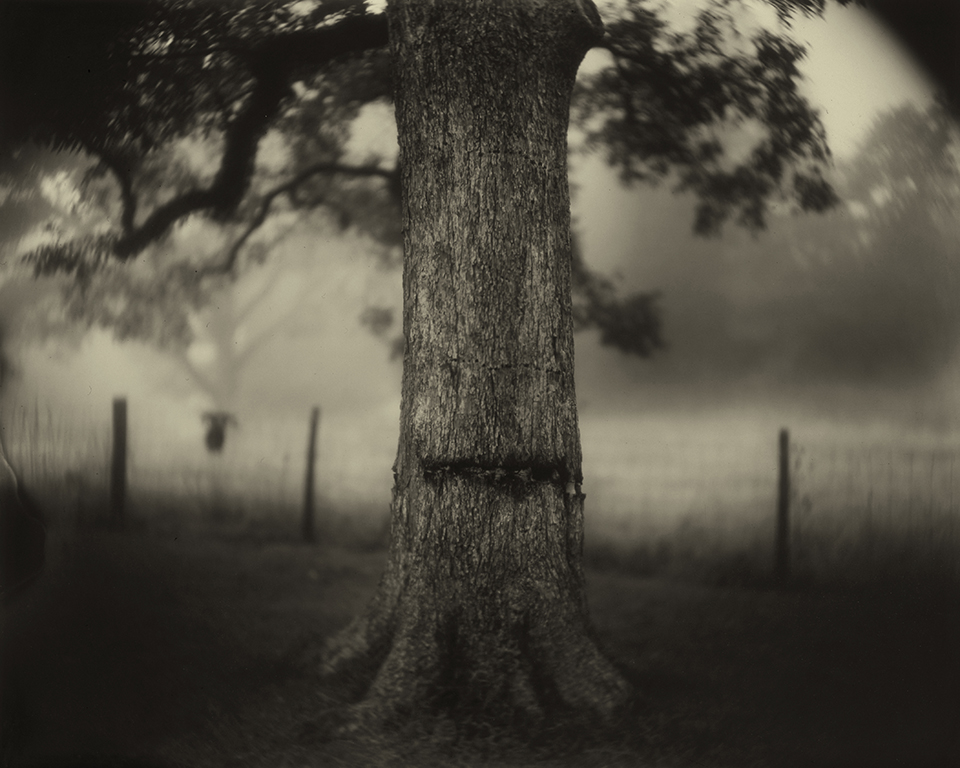 Mann_Deep_South_Untitled_(Scarred_Tree).jpg