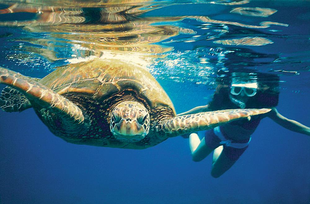 Turtle & Snorkel-maui.jpg