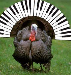 piano turkey.jpg
