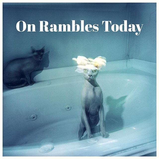 "@rambles.ramblings On Rambles Today is ""Sphynx on Film"" by @cliftonbarker - do check it out and give it a follow! If you haven't heard, Rambles is my blog/magazine and I've just started it on Instagram. More content coming so keep updated at @rambles.ramblings . . . #ramblesramblings #ourstreets #sphynx #film #deathb4digital #life_is_street"