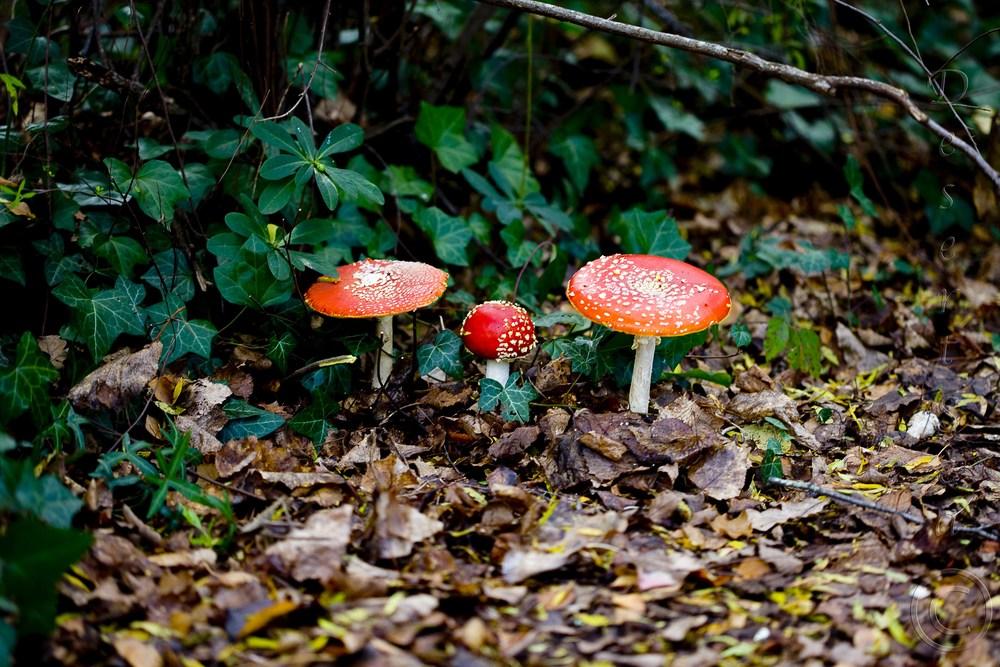 Fairytale Mushrooms_260512_9632a.jpg