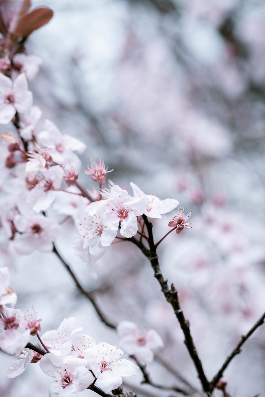 Tassie Spring_060912_0508blossoms.jpg