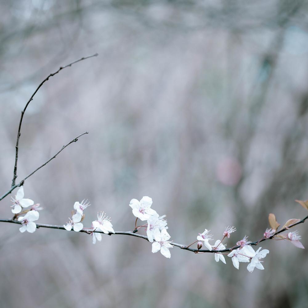 Tassie Spring_060912_0516blossoms.jpg