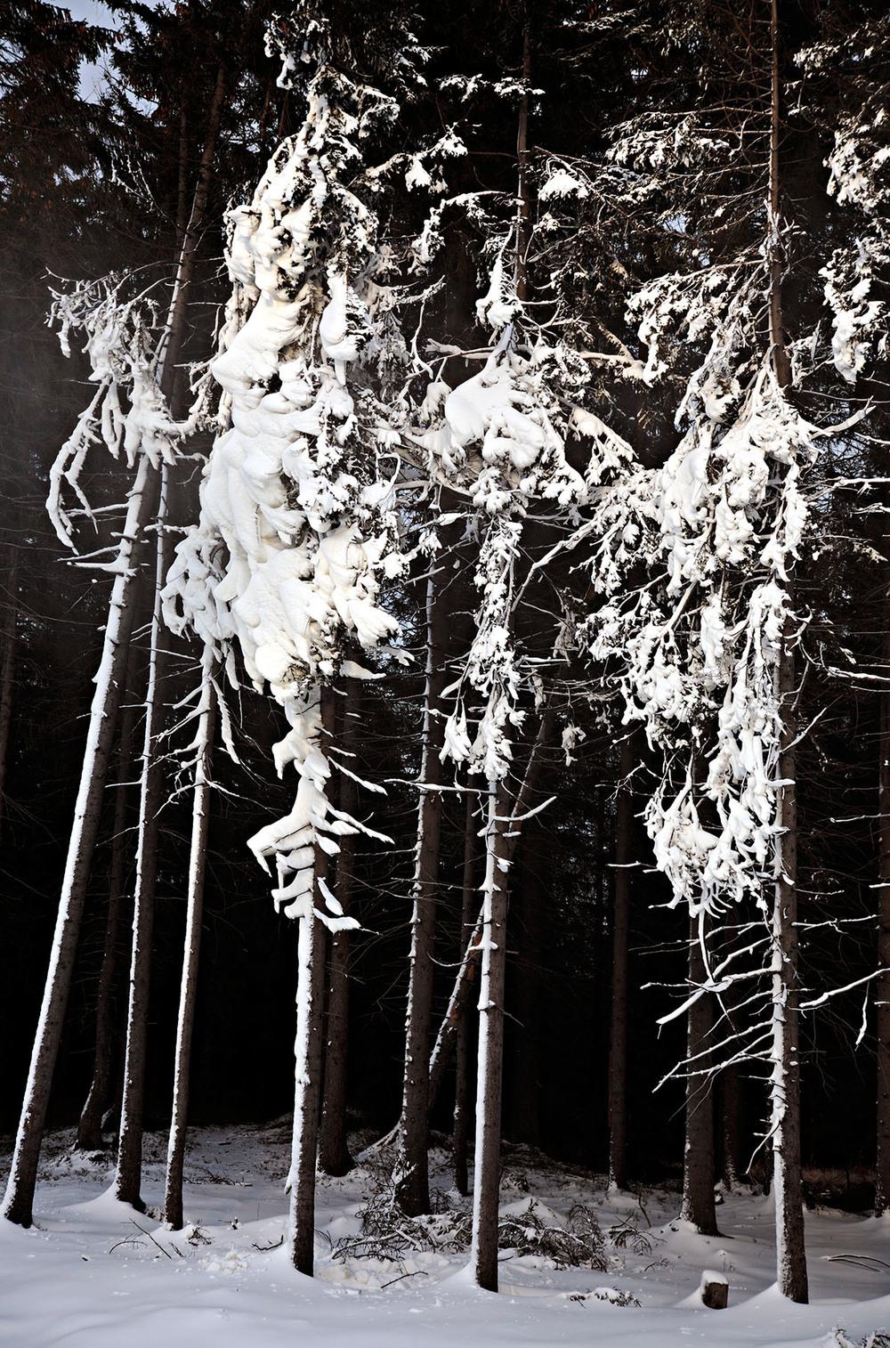 I Inngrep-prosjektet utforsker jeg møtet mellom det naturlige og det menneskeskapte.  Les mer...    Kunstsnø I 2006