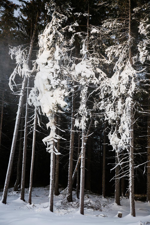 Kunstsnø I 2006, fra Inngrep-serien, 20 x 30 cm, pris: 2700 kr (innrammet). Snøen som dekker trærne er ikke naturlig, men kommer fra en snøkanon ved Tryvannskleiva i Oslo. Inngrep er en serie fotografier med natur med menneskelige inngrep.