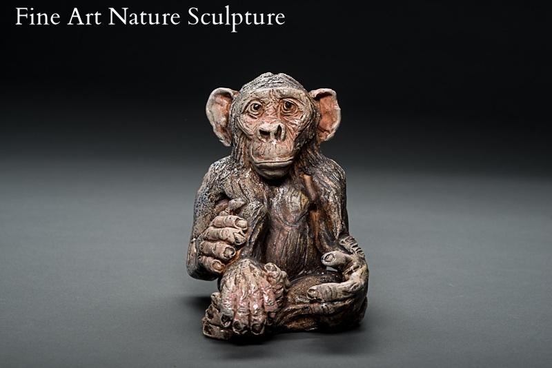 ambrose chimp.JPG
