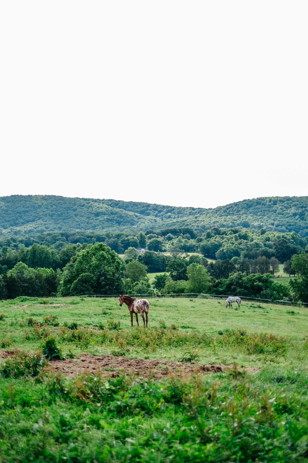 virginia-countryside